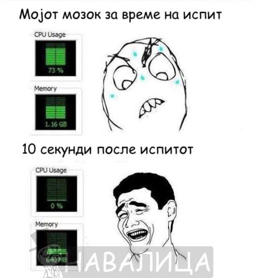 mozok1