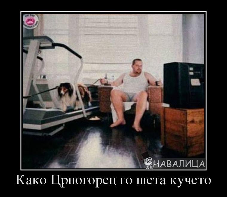 523718_kako-tsrnogorets-go-sheta-kucheto_demotivators_to