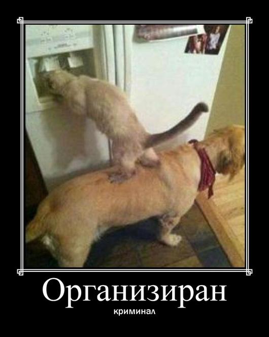 organiziran